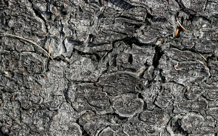 charred wood texture, gray wood texture, burnt wood texture, gray wood background, wood texture
