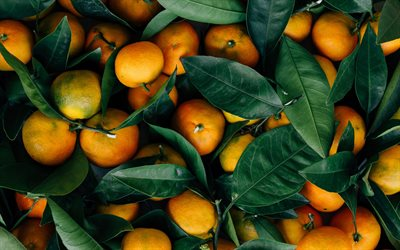 tangerines, fruits, background with tangerines, citrus