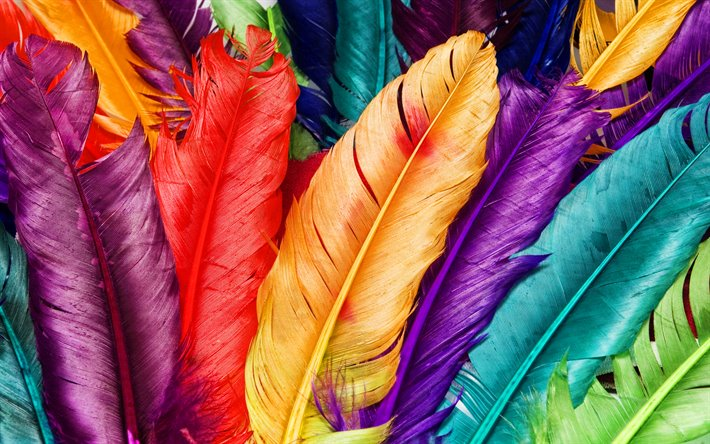 colorful feathers, macro, feathers backgrounds, background with feathers, feathers textures, colorful feathers background, feathers patterns