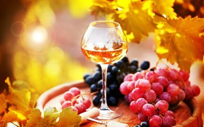 white wine, grapes, autumn, glass of wine, wine