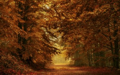 autumn forest, park, yellow leaves, autumn, path in the forest