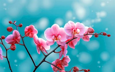 pink orchids, tropical flowers, orchids branch, pink flowers, orchids