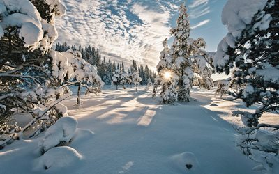 Norway, rays of sun, winter, snowdrifts, beautiful nature, trees under the snow