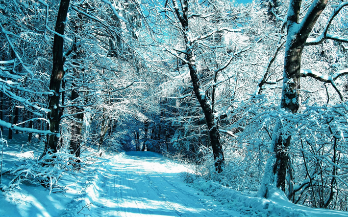 winter, snowy road, forest, snowdrifts, blue snow, HDR, beautiful nature
