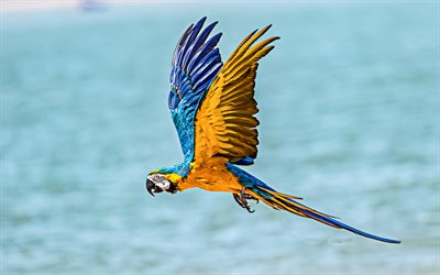 flying macaw, 4k, sea, bokeh, parrots, macaw, exotic birds, colorful parrots, Ara