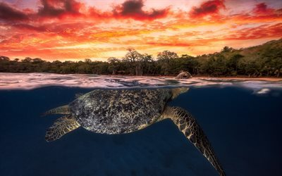 turtle, underwater, tropical islands, sunset, sea animals
