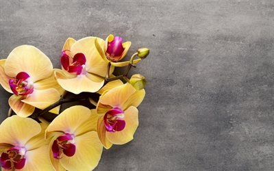 yellow orchids, tropical flowers, orchids branch, yellow flower, orchid