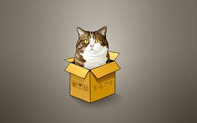 gatto, box, minimal, creative