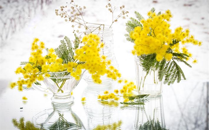 Scarica sfondi mimosa giallo fiori di primavera for Mimosa in vaso