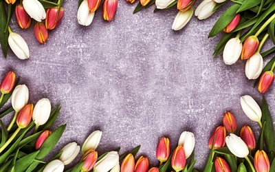 tulips frame, purple background, flower frame, tulips, spring flowers, pink tulips