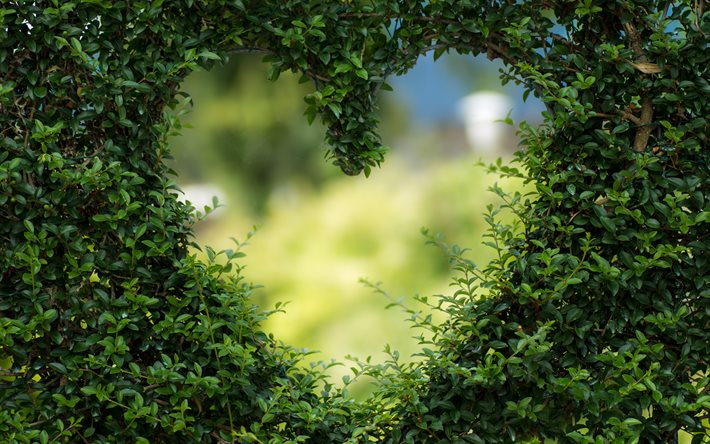 Love nature, green grass heart, nature heart frame, eco concepts, environment, love the planet, eco frame, natural green frame, grass frame heart