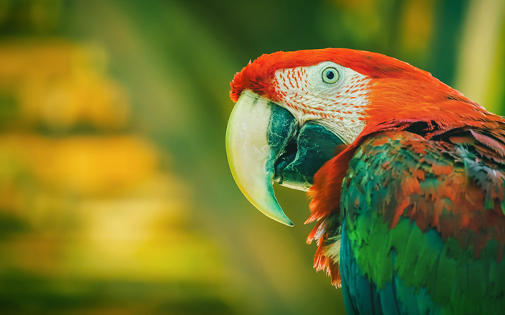 Red-and-green macaw, green-winged macaw, beautiful parrot, beautiful birds, macaw, parrots