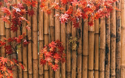 bamboo, autumn red leaves, Japan, autumn