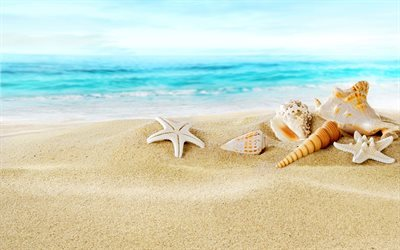 Sand, Ocean, coast, Seashells, Beach