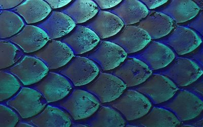 fish scales, 4k, macro, scales textures, 3D textures, background with scales, blue backgrounds, scales