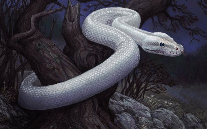 white snake, forest, night, painted snake