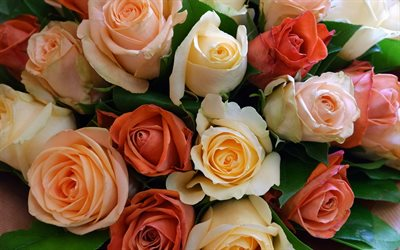 roses, rosebuds, background with roses, orange roses, purple roses, beautiful flowers, bouquet of roses