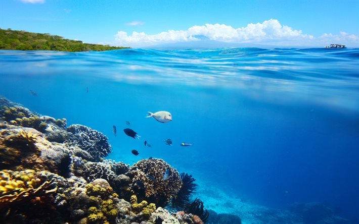 Download Wallpapers Coral Reef, Under Water, Fish, Sea