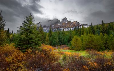 rocks, forest, green trees, mountain landscape, fog, Banff National Park, Alberta, Canada