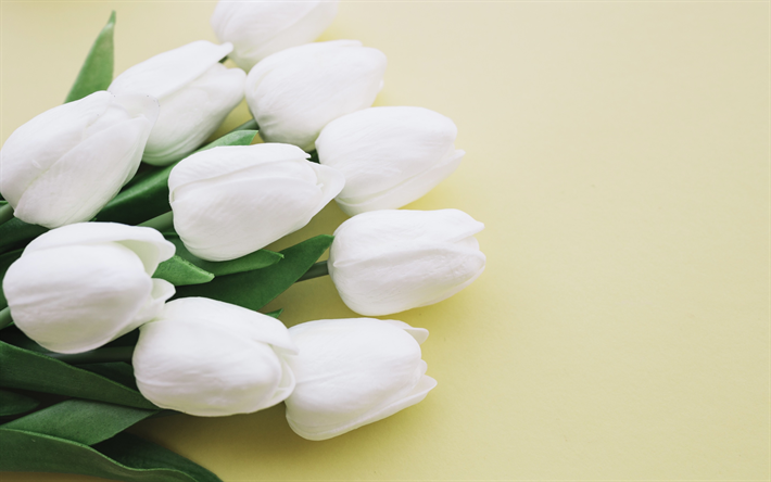 Download Wallpapers White Tulips Beautiful White Flowers Tulips On