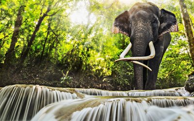 Elephants, jungle, waterfalls, Thailand, wildlife, thai elephant, beautiful nature, Elephantidae