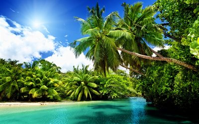 tropics, blue water, harbor, palm trees, sea, paradise, summer travel