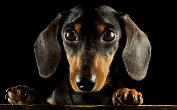 Dog Wallpaper Widescreen