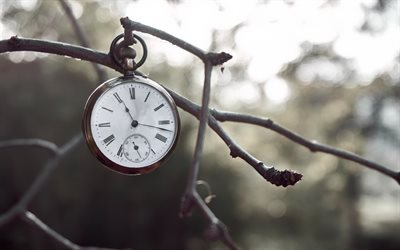 old pocket watch, time, clock, branch, winter