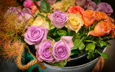 purple roses, orange roses, bouquet of roses, metal bucket with roses, beautiful flowers, roses
