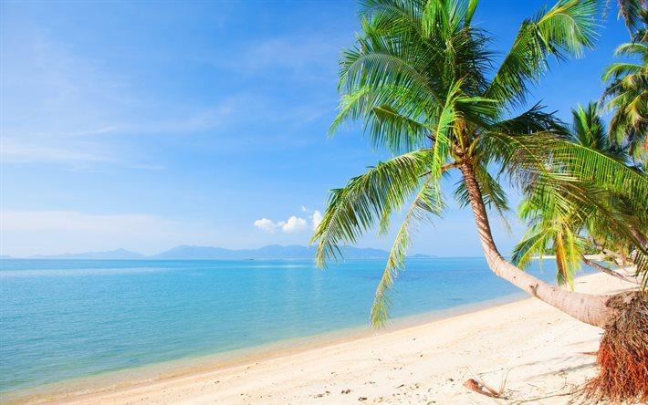 Herunterladen Hintergrundbild Meer, Tropische Insel