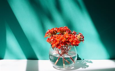 bouquet of red flowers, a vase of flowers, spring flowers, blue wall, flowers in the water