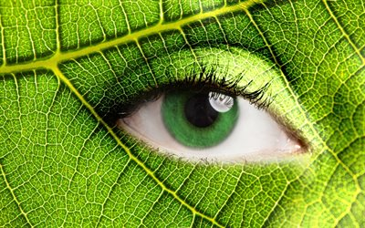 Ecology, green leaf, eye, Eco concepts, take care of nature