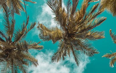 palm trees bottom view, blue sky, palm leaves against the sky, palm trees, summer, tourism, summer travel