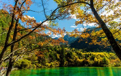 Jiuzhaigou National Park, 4k, blue lake, beautiful nature, autumn, forest, Chinese nature, yellow trees, Asia, Valley of Nine Villages, China