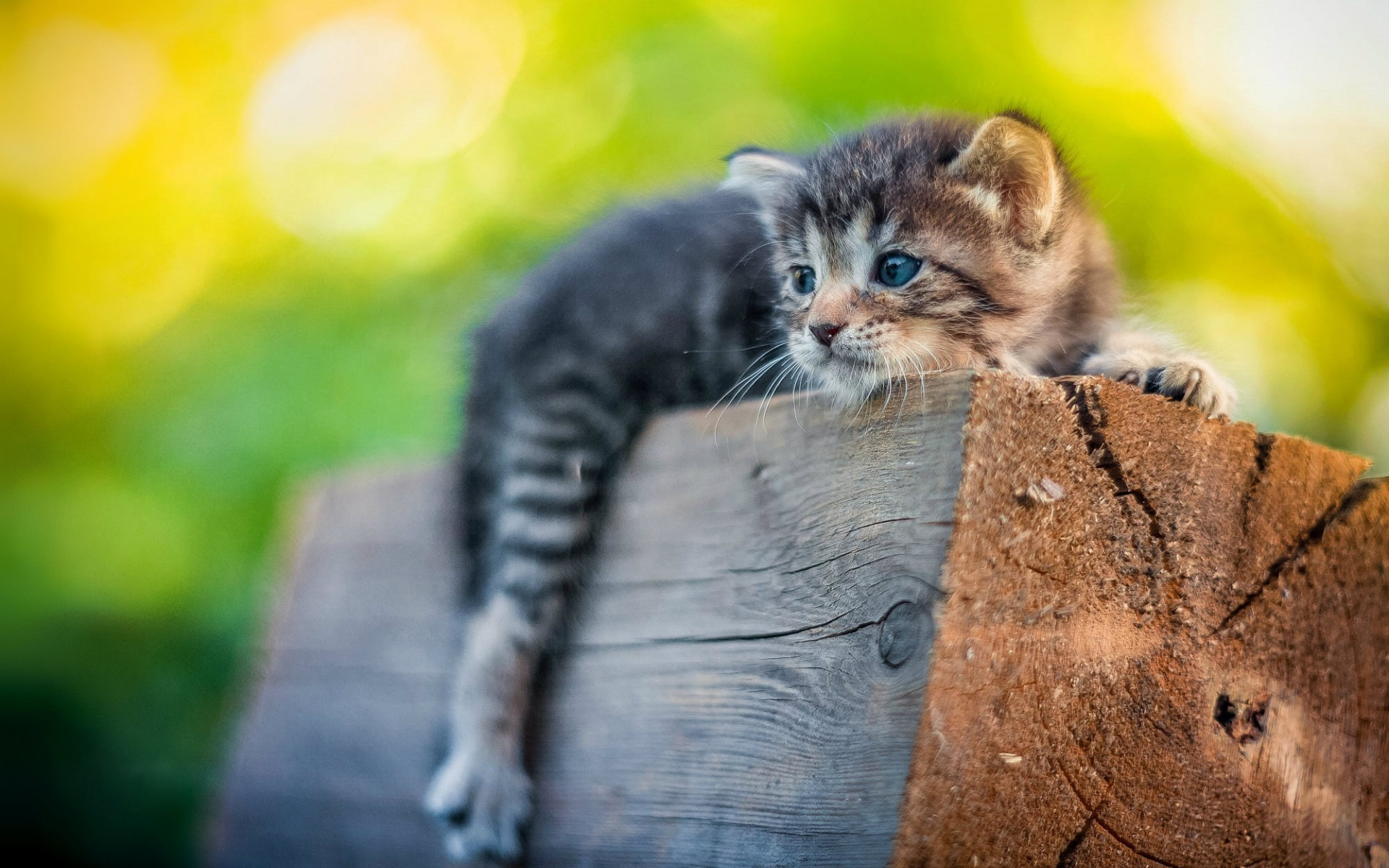 Small cute animals for pets