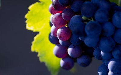 grapes, close-up, harvest, fruits