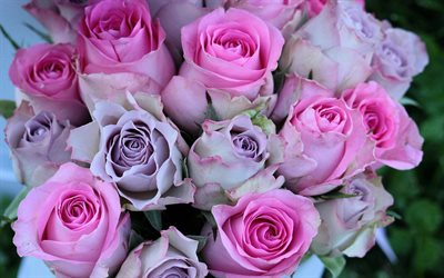 pink roses, rosebuds, purple roses, background with roses, beautiful bouquet, roses