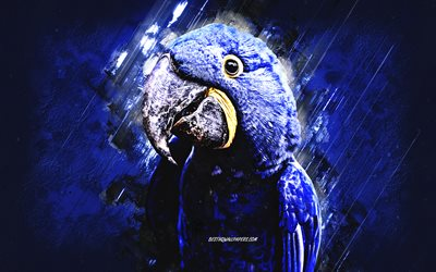 Hyacinth macaw, blue parrot, blue macaw, blue stone background, hyacinthine macaw, parrots, grunge art