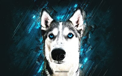 Husky, dog, blue stone background, husky blue eyes, Siberian Husky, beautiful dog