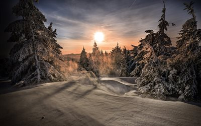 snowy forest, evening, sunset, winter landscape, snow, mountains, forest, winter