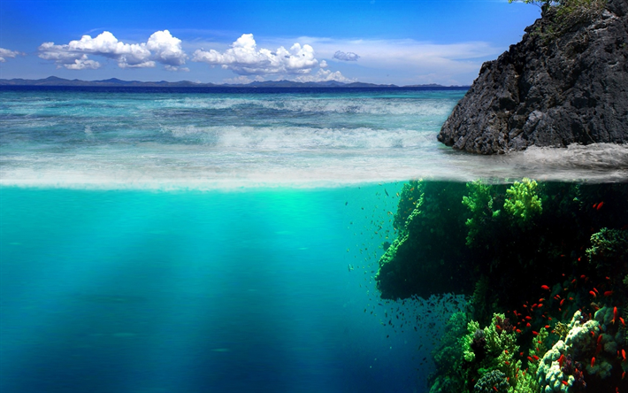 tropical island, coast, under water and over water, ocean, reef, coral, waves, fish, fauna
