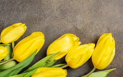 yellow tulips, brown background, yellow flowers, tulips, spring flowers, frame with yellow tulips, tulip buds