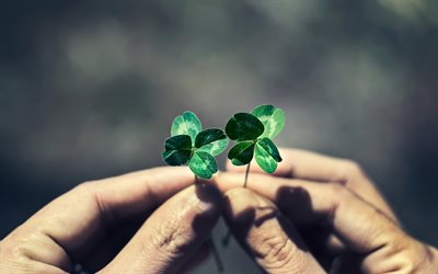 clover leaves in hands, green leaves, clover, save the planet, environment, ecology