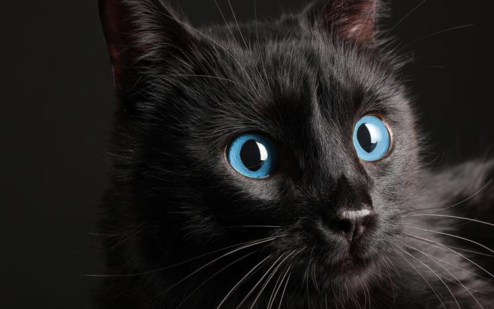 chat noir, yeux bleus, 4k, les animaux de compagnie, les chats