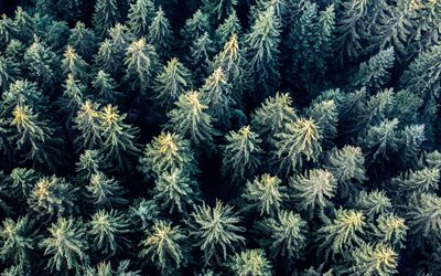 forest top view, treetops, coniferous forest, aerial view, winter, forest, trees