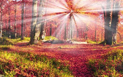 Scarica sfondi autunno montagna foresta montagne dei for Immagini autunno hd