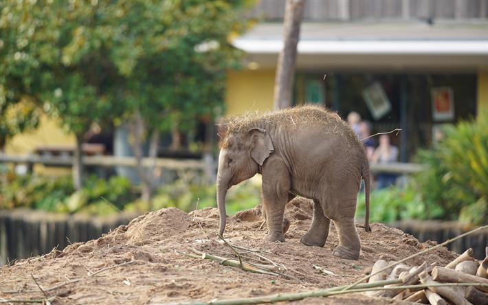 Telecharger Fonds D Ecran Petit Elephant Animaux Mignons