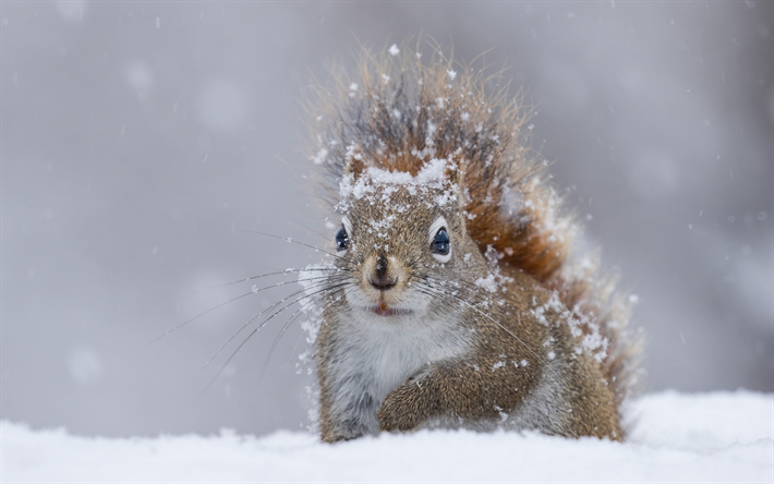 Best Squirrel Food For Winter