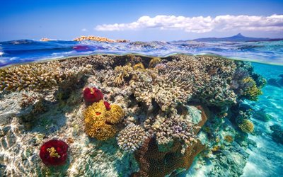 coral reef, ocean, underwater, tropical islands, coral