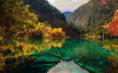 jiuzhaigou, fünf blume lake, nationalpark, emerald lake, mountain lake, berg, landschaft, provinz sichuan, china